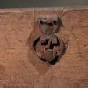 A5425F-antique-coffer-blanket-chest-oak