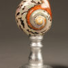 Pair of large nautilus shells A5507B