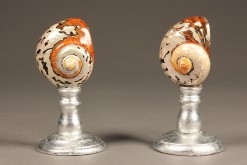Pair of large nautilus shells A5507A